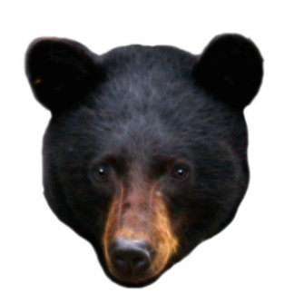 BLACK BEAR Head Sculpted Wildlife Art Gift Photo Sculptures