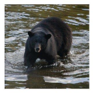 Black bear in creel acrylic print