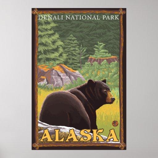 Black Bear in Forest - Denali National Park, AK Posters