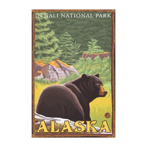 Black Bear in Forest - Denali National Park, Canvas Print