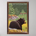 Black Bear in Forest - Glacier National Park, MT Posters