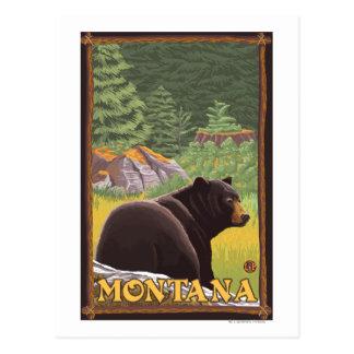 Black Bear in Forest - Montana Postcard