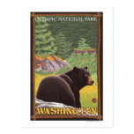 Black Bear in Forest - Olympic Nat'l Park, WA Post Cards