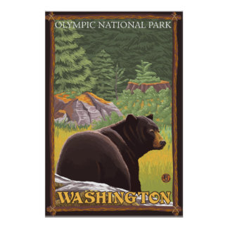 Black Bear in Forest - Olympic Nat'l Park, WA Print