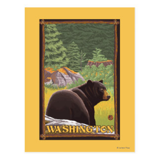Black Bear in Forest - Washington Postcard
