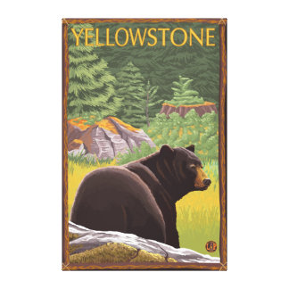Black Bear in Forest - Yellowstone National Park Gallery Wrapped Canvas