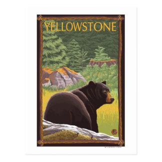 Black Bear in Forest - Yellowstone National Park Postcard