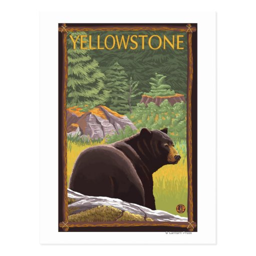 Black Bear in Forest - Yellowstone National Park Postcards