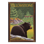 Black Bear in Forest - Yellowstone National Park Posters