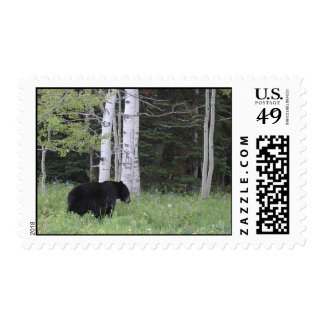 Black bear in NW Montana Postage
