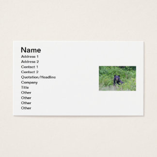 Black Bear in the Woods Business Card