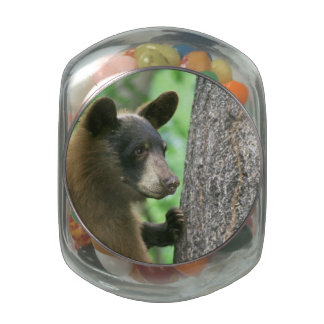 Black Bear in The Woods Jelly Belly Candy Jar