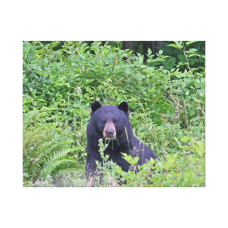 Black Bear in the Woods Canvas Print