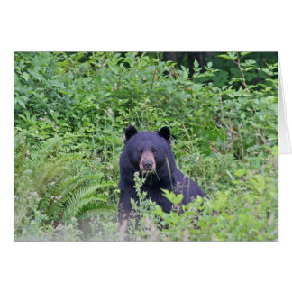 Black Bear in the Woods Greeting Card