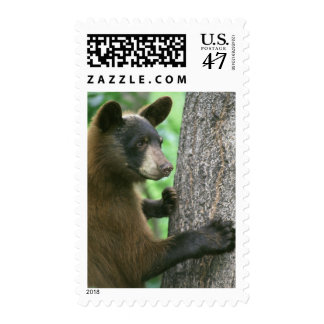 Black Bear in The Woods Postage