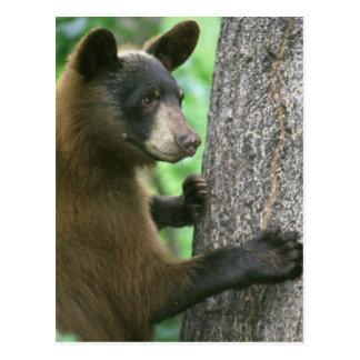 Black Bear in The Woods Postcard
