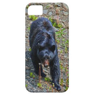 Black Bear in Yukon Wilderness Wildlife Photo iPhone SE/5/5s Case