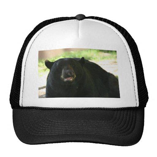 black bear mesh hats