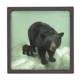 Black bear mom and cub premium trinket boxes