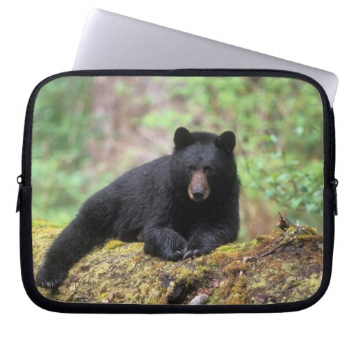 Black bear on an old growth log in the laptop sleeves