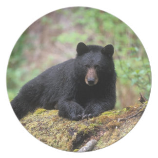 Black bear on an old growth log in the melamine plate