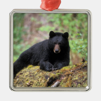 Black bear on an old growth log in the metal ornament