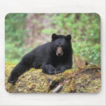 Black bear on an old growth log in the mousepad