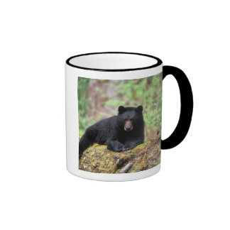Black bear on an old growth log in the mugs