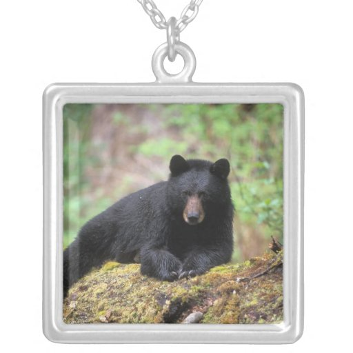 Black bear on an old growth log in the necklace