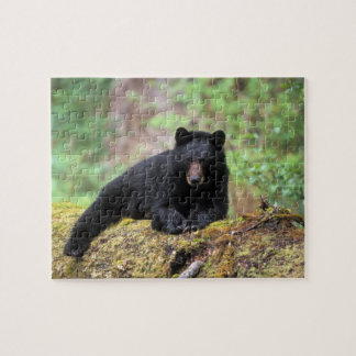 Black bear on an old growth log in the puzzle