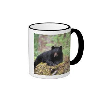 Black bear on an old growth log in the ringer mug