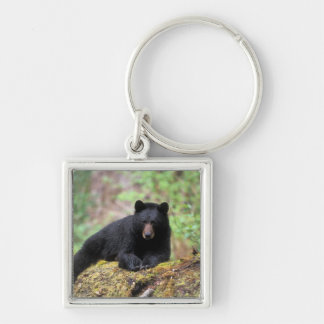 Black bear on an old growth log in the Silver-Colored square keychain