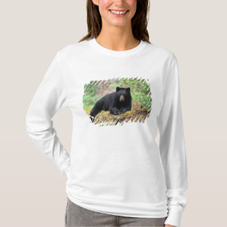 Black bear on an old growth log in the T-Shirt