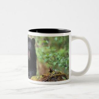Black bear on an old growth log in the Two-Tone coffee mug