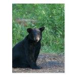 black bear post cards