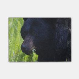 Black Bear Post-it Notes