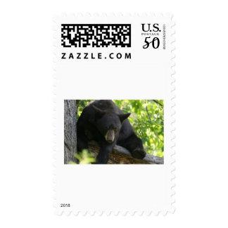 black bear postage