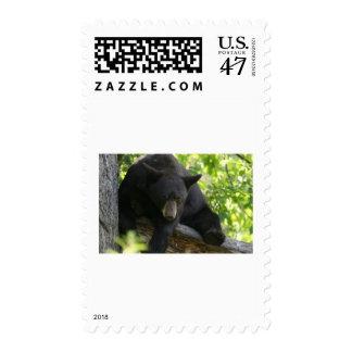 black bear postage stamp