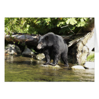 "Black Bear ""Salmon Spotting"" Greeting Card"