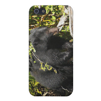 "Black Bear ""Salmon Spotting"" Wildlife iPhone Case"