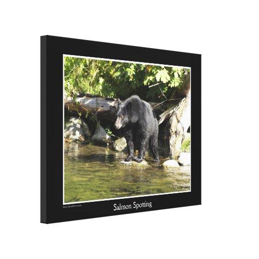 "Black Bear ""Salmon Spotting""  Wildlife Photo Print Stretched Canvas Print"
