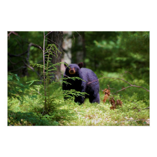 "Black Bear 'Scenting"" Print"