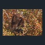 "Black bear searching for autumn berries canvas print<br><div class=""desc"">Jaynes Gallery / DanitaDelimont.com | USA,  North America,  Wyoming | USA,  Wyoming,  Grand Teton National Park. Black bear searching for autumn berries. Credit as: Don Grall / Jaynes Gallery / DanitaDelimont.com.</div>"