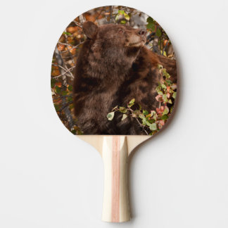 Black bear searching for autumn berries ping pong paddle