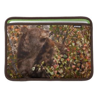 Black bear searching for autumn berries MacBook air sleeve