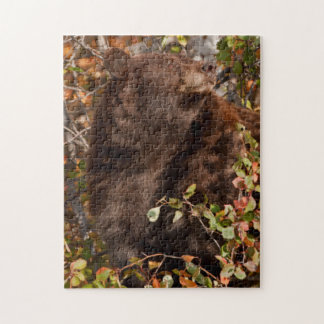 Black bear searching for autumn berries jigsaw puzzles