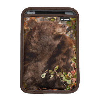 Black bear searching for autumn berries sleeve for iPad mini