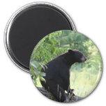 black bear sitting in tree 2 inch round magnet
