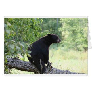 black bear sitting in tree card