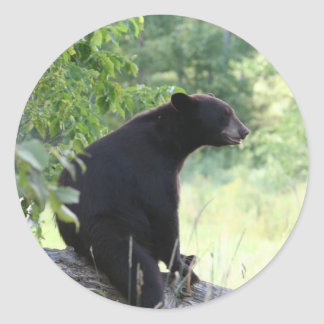 black bear sitting in tree classic round sticker